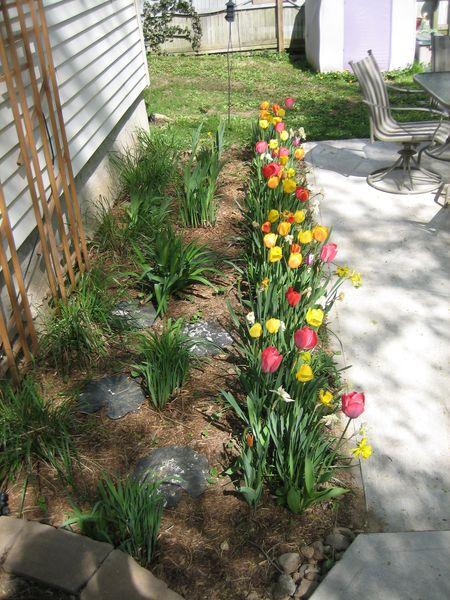 Patio garden 04-30-09