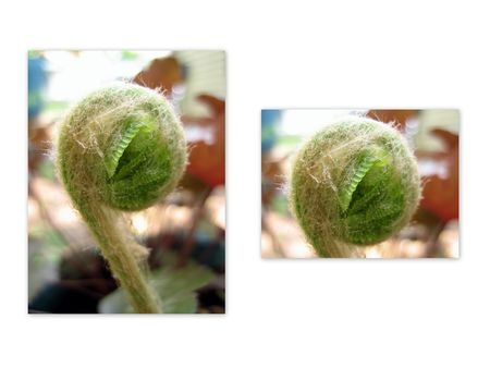Fiddlehead collage
