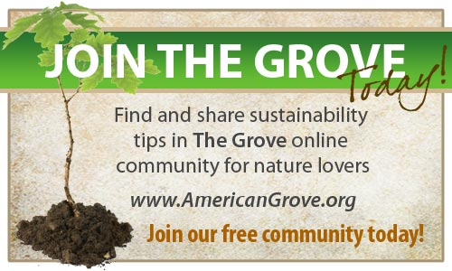The Grove_blogger graphic